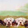 rinalia: (Puppy Heads)