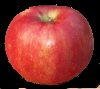 xylohypha: great apple for pies and applesauce (Default)