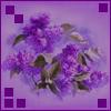 ajatshatru: (Lilacs)