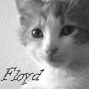engenda: (Floyd)