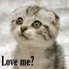 kleine_teekanne: (animals: Scottish Fold kitten)