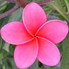 embroiderama: (Flower - pink)