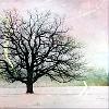 embroiderama: (Winter tree pink)