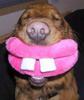 mific: (Dog smile)