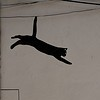 ailuromancy: graffiti of a black cat leaping down stairs (leaping cat, monochrome)
