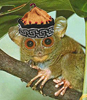 digitalemur: (tarsier, hat, lemur) (Default)