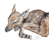 chaste: Sleeping fawn with a prosthetic doll hand.  (Default)
