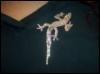 karaokegal: (Gecko)