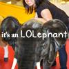 nova: me climbing onto a giant stuffed elephant (me: wtf, me: lolephant)