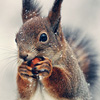 static_hiss: squirrel icon made by someone else (Default)