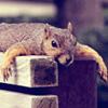 squirrels: (flop)
