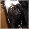 strega_lyth: Кот Онотоле ищет покушать (Кот Онотоле ищет покушать)