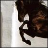 silverthorne: (Black Horse)