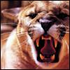 silverthorne: (Puma Snarls)