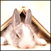 silverthorne: (Book Bunny)
