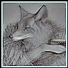 silverthorne: (Coyote Steals Fire (grey phase))
