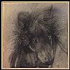 silverthorne: (Grandfather Wolf)