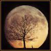silverthorne: (Harvest Moon)