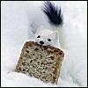 silverthorne: (Stoat Toast)