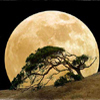 silverthorne: (Dune Moon)
