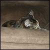 silverthorne: (My Chair!)