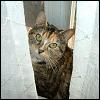 silverthorne: (Window Foot)