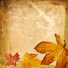 silverthorne: (Autumn Leaves)
