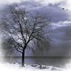 silverthorne: (Winter Tree)