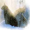 silverthorne: (Snow Lynx)