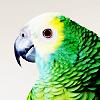 perfectshapes: (birdie)