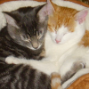 lemon_badgeress: Kittens!  THEY HUG (hug)