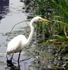 egret: egret in Harlem Meer (Default)