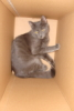 franklanguage: My cat in a box (Tripod in box)