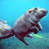 talitha78: (jillicons hippo baby)