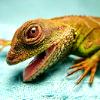 talitha78: (jillicons rawr lizard)
