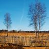 ay: It's trees (Photography - Trees)