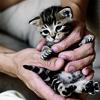 valkyrieza: (kitty)