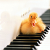 firefly99: A perfect fluffy yellow duckling sitting on a piano, quacking (duckie)