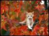 white_sin: (Kitten)