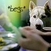 jamoche: Dief begging (Dief begging)