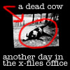 hippie_hacker: (dead cow)