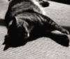 hedda62: my cat asleep (Default)