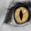 roguequill: (eye)