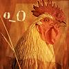 infiniteviking: A chicken staring in disbelief. (1)