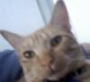 turandot: (catster)