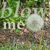 raisedbymoogles: (dandelion)