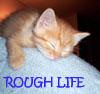 girlpearl: (life is hard)