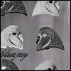 bluejay: my art, of budgies (default)