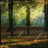 mharific: Forest in sunlight (arthurian - forest)