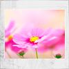 flamingchemist: a pink flower (flower)